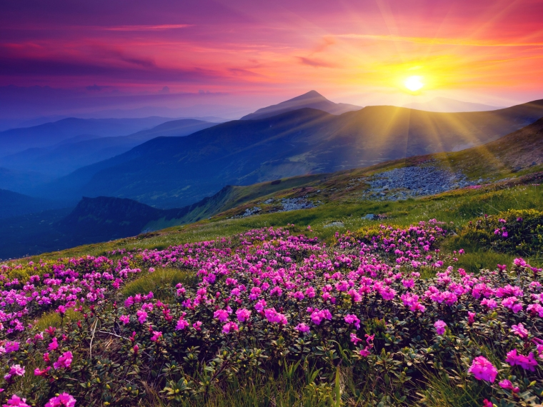 Meadows-Purple-Wild-Flowers-Mountains-and-Sunset-HD-Wallpaper--NatureWallBase.Blogspot.Com